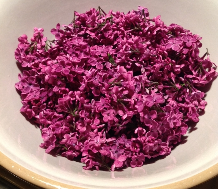 foraged lilacs