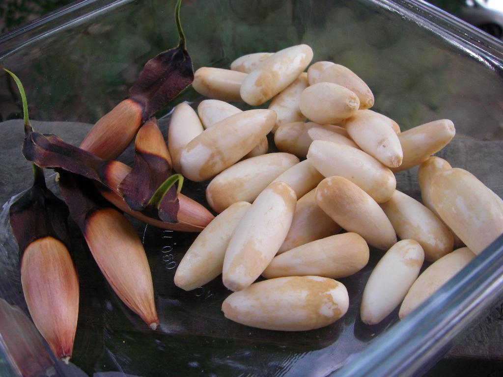monkeypuzzlenuts